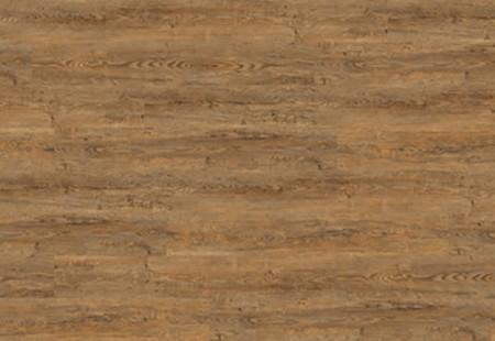 Wild Amber Oak